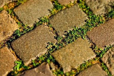 Comment désherber les plantes spontanées sur le trottoir ?